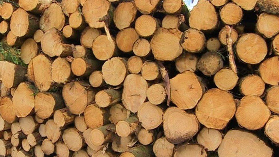 FDT entrenching modern timber processing in TZ