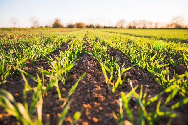 DID YOU KNOW? Tanzania favours serious investor in agriculture