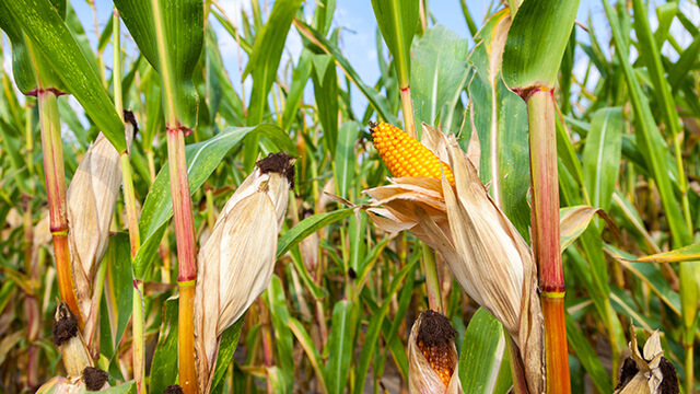 Allocating funds to purchase  maize from farmers, wise idea