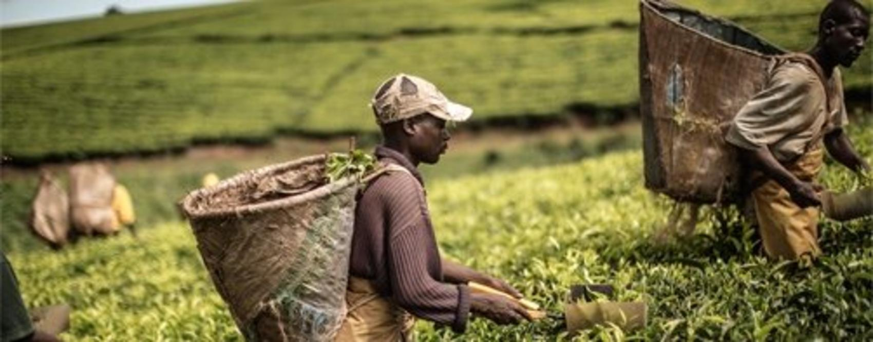 Investment in agriculture  must be given new push