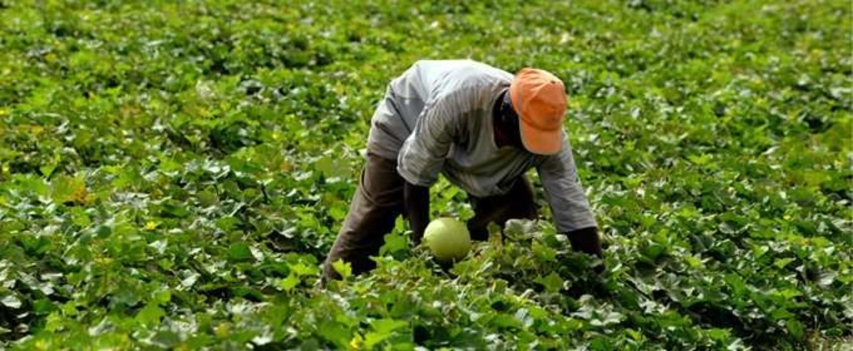 Govt hails CRDB  for supporting  agricultural sector