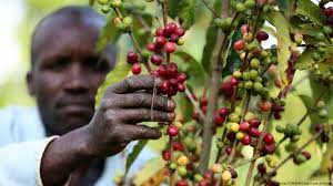 Certification of coffee producers as a solution to price volatility