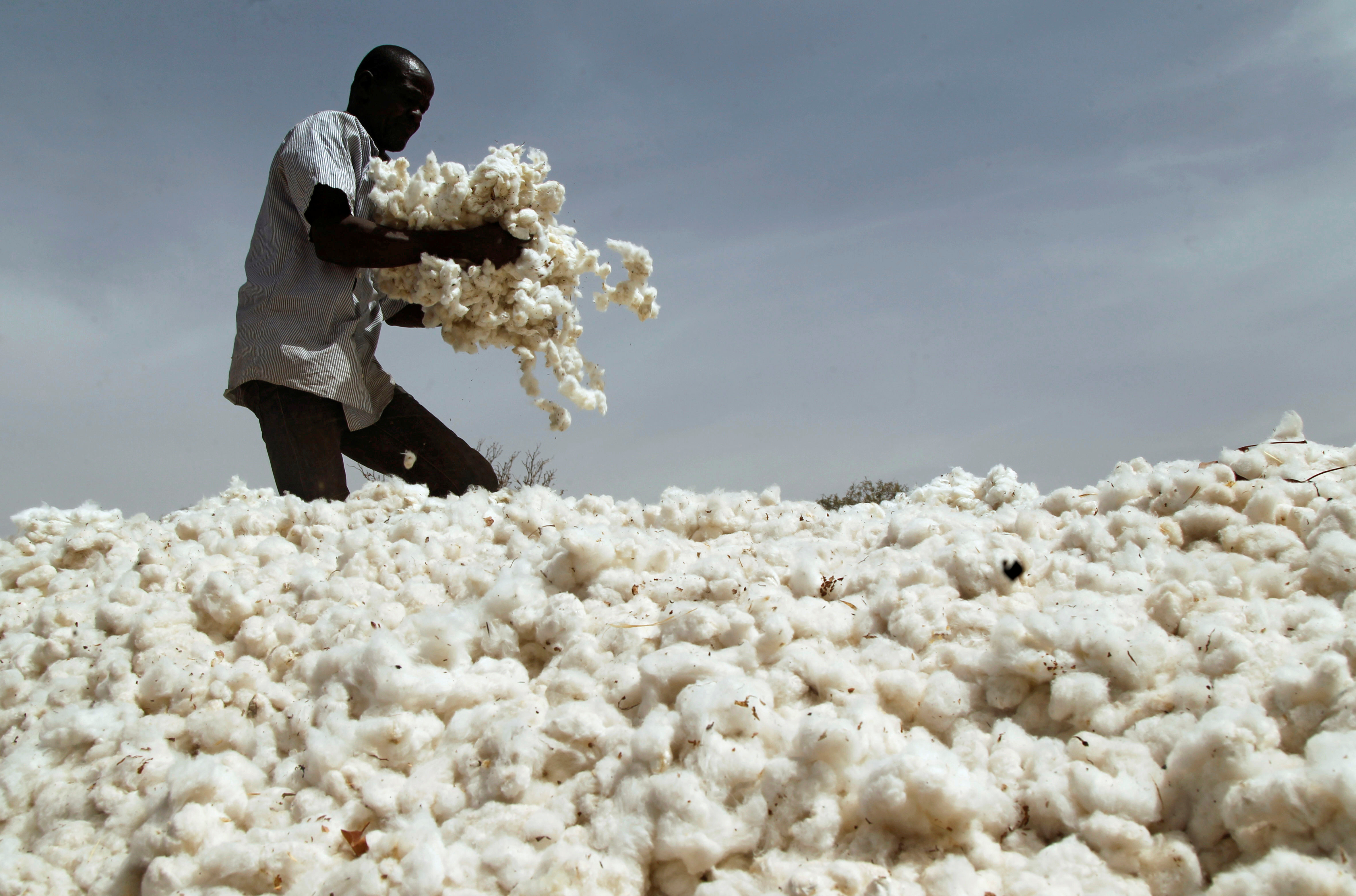 Adopt measures to increase cotton production, RC orders
