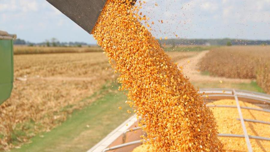 CPB process 180 tonnes of maize daily