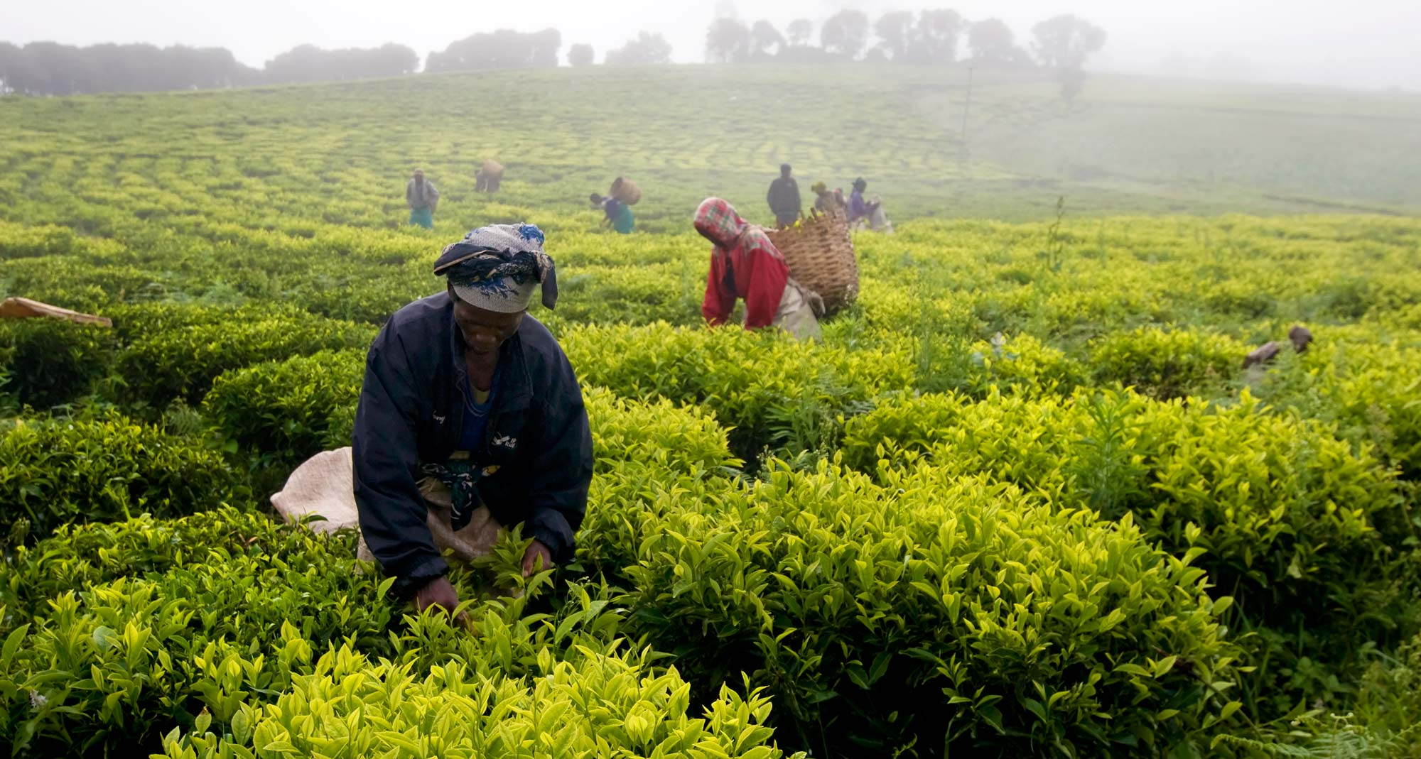 Tax review to lift  up agriculture
