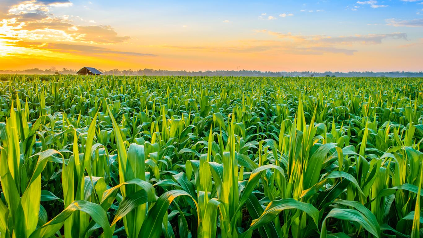 Why AGRF summit is important in agriculture transformation agenda